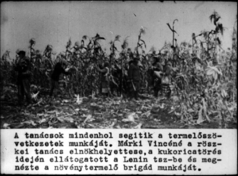 dia42-1954